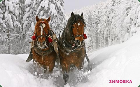 Прогуляемся на лошадях в заснеженный горный лес